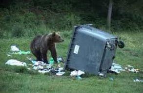Borboly szerint mintegy 50 medve problémás Hargita megyében