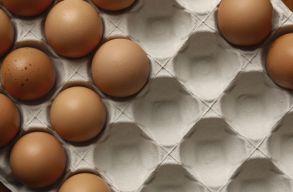 Romániából származó rovarirtó miatt vontak vissza 3 millió tojást Németországban és Hollandiában