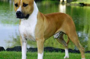 Kutya ölt meg egy gyereket Máramarosszigeten