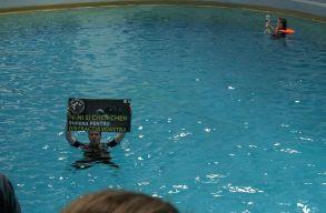Kolozsvári vegánok léptek fel a delfinek fogva tartása ellen