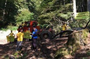 A Csukás-hegységben tüntet a Greenpeace