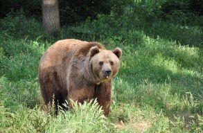 Kiadták a rendeletet a 140 medve és 97 farkas kilövésérõl