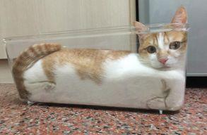 A macskák folyékonyságának a kutatásáért (is) járt idén az IgNobel