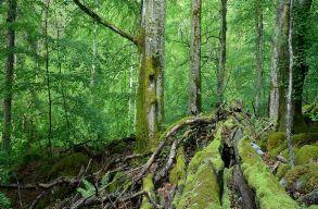 Az Európai Bizottsághoz fordultak a civilek a természetvédelmi területek védelmében