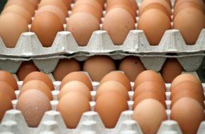 Nagyon megdrágult a tojás. Elégedetlen a mezõgazdasági miniszter