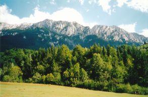 Európa ikonikus vadvilágát és erdeit fenyegeti a környezeti bûnözés