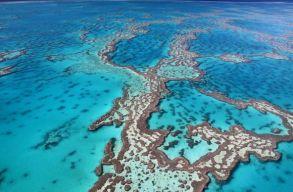 Új módszerrel sikerülhet megmenteni a Nagy-korallzátonyt