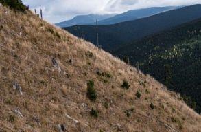 Nemzeti parkból a karosszékbe: a Schweighofer ismét a kettõ közé ült