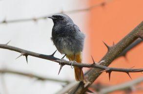 Ami jó a madaraknak, jó az embereknek is