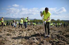 """Tíz hektár erdõ telepítésével folytatódik az """"Erdõ a jövõnek"""" projekt Brassó megyében"""