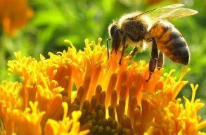 Az EU betiltotta a méhekre ártalmas rovarirtó szereket
