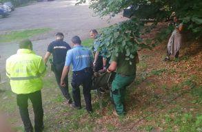 A zernyesti rezervátumba szállították a Szent Anna-tónál turistára támadó Sanyit