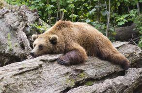 Medvehúst is sütnek a hétvégén Háromszéken
