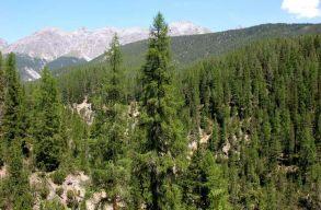 Az EU-hoz fordulnak a civilek, hogy megvédjék a kormánytól a természetvédelmi területeket
