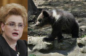 A környezetvédelmi miniszter házalt egyet Európában a medvékkel, de egyetlen országnak sem kell