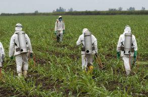 Hatalmas kártérítésre kötelezi a bíróság a Monsantót