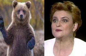 A környezetvédelmi miniszter elment Tusnádfürdõre, és megsürgette a medvék kiemelését