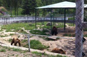Gondozóikra támadtak a medvék a brassói állatkertben