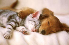 Nem árulhatnak többé kiskutyát és kismacskát a brit állatkereskedések