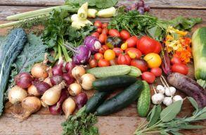 Városi kertészek mozgalma mûködik Kolozsváron az élelmiszer-önellátásért