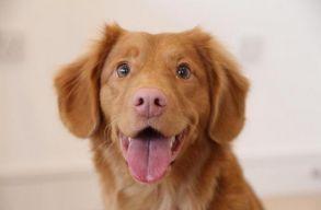 Lehet, hogy a kutyád nem is olyan okos, mint képzeled?