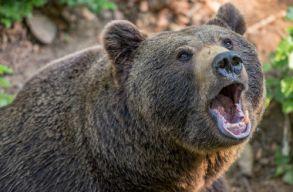 Fejszével ölte meg a feleségére és rá támadó medvét egy Prahova megyei férfi
