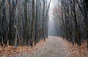Csak erdõritkítás miatt vágnak ki fákat a Hója-erdõben