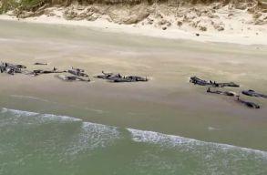 145 delfin vetõdõtt partra Új-Zélandon