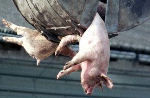 Szenvedésközösségben élünk az állatokkal
