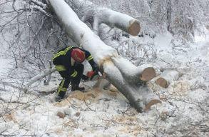 A havazás miatt több száz fát vágnak ki Hargita megyében