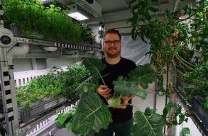 Nagy mennyiségû zöldséget sikerült termeszteni talaj, napfény és védõszerek nélkül