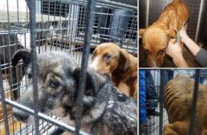 Csaknem húsz kutya tetemére bukkantak egy prázsmári ingatlanban