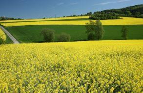 Elhozhatnák a fenntartható jövõt, de még mindig drágák a bioüzemanyagok