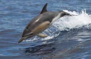 Új rabszolga-felszabadítás? Következzenek a delfinek!
