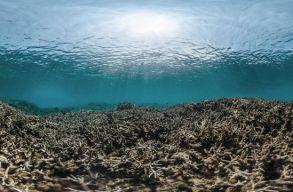 """""""Lázas"""" óceánok: mintha erdõtûz pusztítana a víz alatt"""
