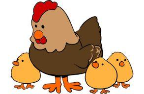 Antibiotikum-rezisztens baktériumokat találtak a német szupermarketek olcsó csirkehúsaiban