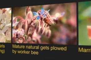 Nézzél pornót, és mentsd meg a méheket!