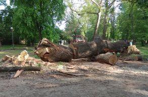 Petõfi is ülhetett az árnyékában? Miért mentsük meg az öreg, odvas fákat?
