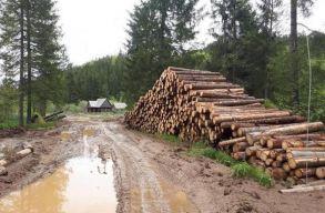 A fakivágások miatt teljesen feltúrták az utat a Pádis turisztikai parkban