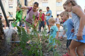 Civil összefogással sikerült megmenteni a szatmárnémeti Sugárút egyetlen fáját