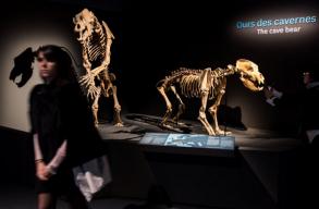 A barlangi medve kihalásában is szerepet játszhatott az ember