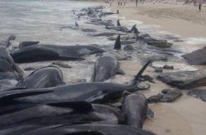 Nõ a partra vetõdött delfinek és bálnák száma Nagy-Britanniában