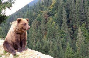 Sürgõsségi központban kezelik azt a Maros megyei férfit, akit medve sebesített meg az éjszaka folyamán