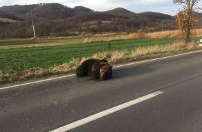 Borboly Csaba kéri a beavatkozási folyamat decentralizálását medvekérdésben
