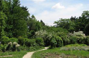 Ökologizálási és ültetési kampányt indít a BBTE