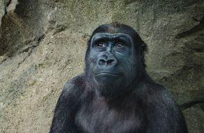 160 éves A fajok eredete, de a romániai tantervbe mégsem fért bele