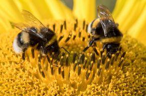 Európai polgári kezdeményezéssel tennék méhbaráttá a mezõgazdaságot