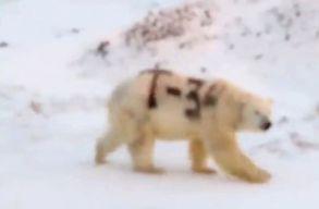 Fekete feliratot festettek ismeretlenek egy jegesmedvére Oroszországban
