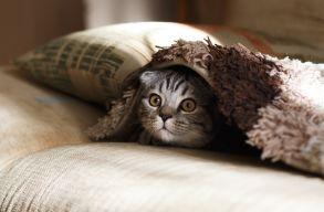 Holland kutatók szobafogságra ítéltetnék a macskákat
