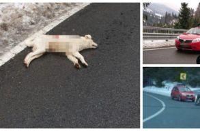 Az egész ország azon háborog, hogy lelõttek az út mellett egy kutyát Máramaros megyében